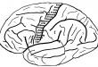 Zdroj: Wikipedia, Anatomy of the Nervous System, licence obrázku public domain
