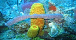 mořské houby, Twilight Zone Expedition Team, Wikipedia, licence obrázku public domain