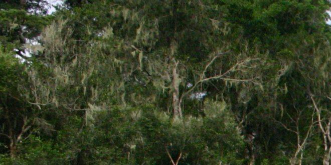 Prales, autor Paul Venter, zdroj: Wikipedia, licence obrázku public domain