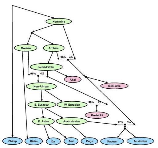 "Genetický ""strom"" člověka,  Kredit: Swapan Mallick, Mark Lipson a David Reich"