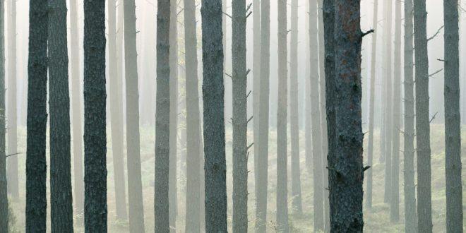 uhlíkové stromy vyzvednutí online datování